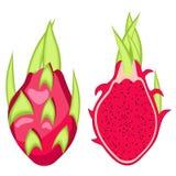 Красный цвет Pitahaya, иллюстрация вектора плодоовощ дракона стоковая фотография rf