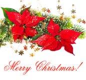 красный цвет poinsettia цветка рождества Стоковая Фотография RF