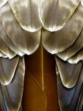 красный цвет prey хоука пер птицы Стоковые Изображения RF