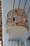 Красный цвет whiskered птица bulbul в уникально классической клетке Стоковая Фотография RF