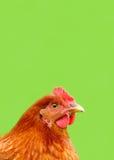 Красный цыпленок на яркой - зеленая предпосылка Стоковое фото RF