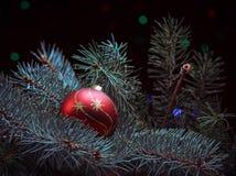 Красный шарик на ветви ели от гирлянды Стоковое фото RF
