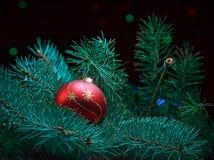 Красный шарик на ветви ели от гирлянды Стоковые Изображения