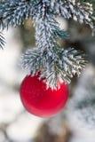 Красный шарик рождества на покрытой снег ветви дерева Стоковое Изображение