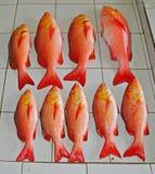Красный люциан для продажи в рыбном базаре стоковые фото