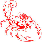 Красный ядовитый скорпион Стоковые Фото