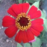 Красный Стоковая Фотография