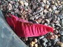 Красный Стоковые Изображения RF
