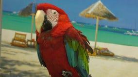 Красный ara попугая акции видеоматериалы
