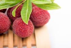 Красный bayberry стоковое изображение