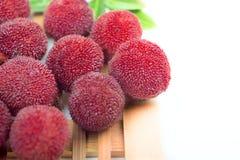 Красный bayberry стоковые изображения rf