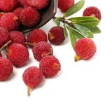Красный bayberry стоковое фото