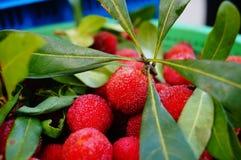 Красный bayberry стоковое изображение rf