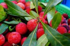 Красный bayberry стоковые фото
