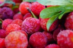 Красный bayberry стоковая фотография rf
