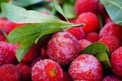 Красный bayberry стоковая фотография
