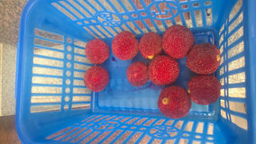 Красный bayberry стоковые фотографии rf