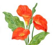 Красный calla Стоковые Фото