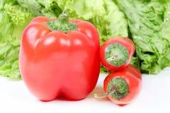 Красный capsicum Стоковая Фотография RF