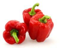 Красный capsicum Стоковое Фото