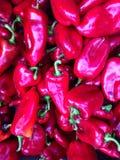 Красный capsicum стоковые изображения rf