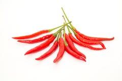 Красный chili изолированный на белизне стоковое изображение rf
