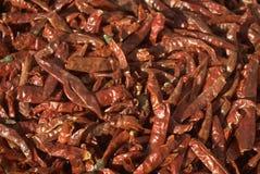 Красный Chili Стоковые Изображения
