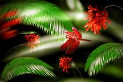 Красный dragonfly на предпосылке зеленого папоротника и красных цветков Природа изображения дождевого леса художнического в зелен Стоковые Изображения