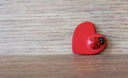 Красный ladybug на деревянной текстуре стоковые изображения