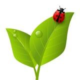 Красный ladybug на лист