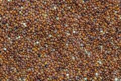Красный quinoa Стоковая Фотография RF