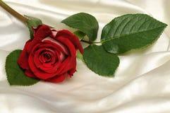 Красный Rose стоковое фото