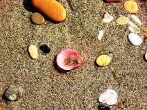 Красный Seashell в песке Стоковое Изображение RF