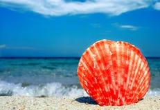 Красный seashell Стоковые Фото