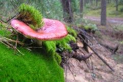 Красный toadstool Стоковое Фото