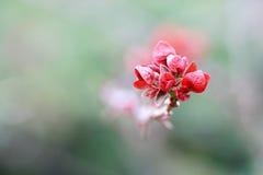 красный wildflower Стоковое Изображение RF