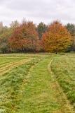 2 красных дерева в ландшафте осени с листьями красного цвета и апельсина Стоковая Фотография RF