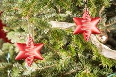 2 красных звезды на реальной рождественской елке Стоковое Изображение