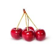 4 красных зрелых сладостных вишни на одной ветви Стоковые Фотографии RF