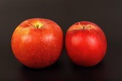 2 красных зрелых яблока закрывают вверх Стоковая Фотография RF