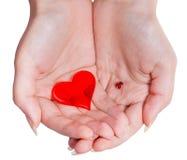 2 красных изолированного сердца в женской пригорошне Стоковые Фотографии RF