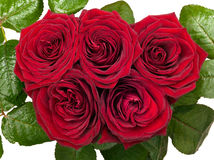 5 красных роз изолированных на белой предпосылке Стоковые Изображения RF