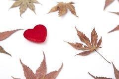2 красных сердце и листь осени Стоковые Фото