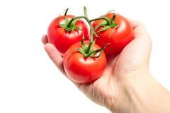 3 красных томата в руке изолированной на белой предпосылке Стоковое фото RF