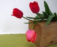 3 красных тюльпана на зеленой предпосылке Стоковое Изображение