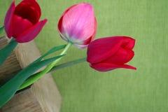 3 красных тюльпана на зеленой предпосылке Стоковое Фото