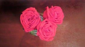 3 красных цветка 3 Стоковые Изображения