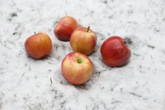 5 красных яблок в снеге Стоковые Изображения