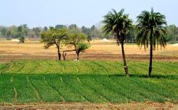 Красота ландшафта обрабатываемой земли естественная стоковое фото rf