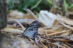 Красота бабочек Стоковое фото RF
